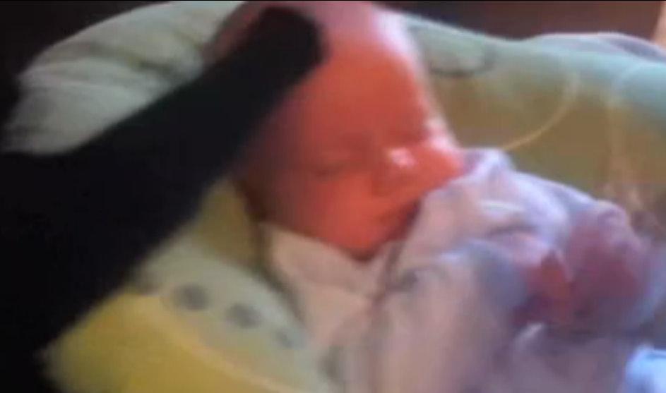 video katze streichelt baby in den schlaf www tagestexte de. Black Bedroom Furniture Sets. Home Design Ideas
