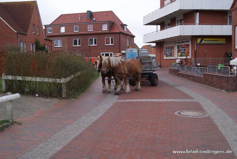 Pferde vorm Supermarkt